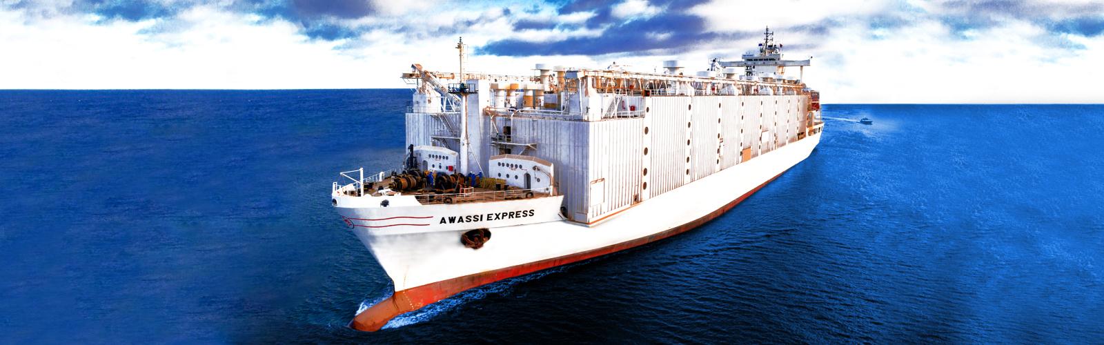 Awassi Ship (2)